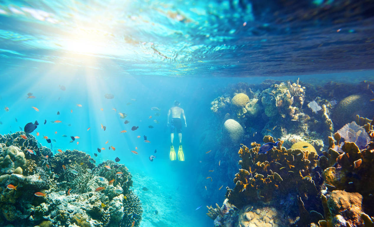 diving-malesia